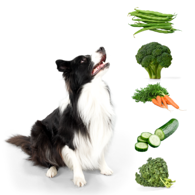 can a dog have cucumber?